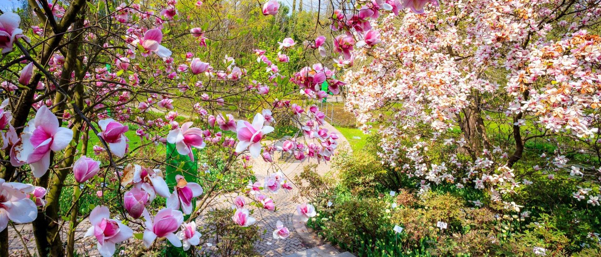 magnolien_86c0aae173